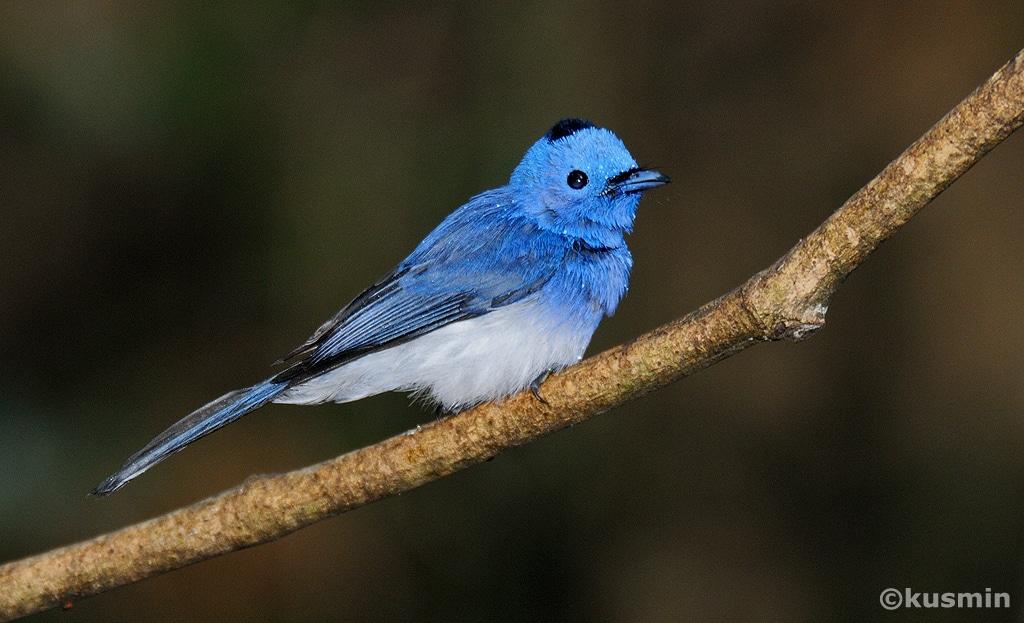 Oiseau Twitter - (Marques et Réseaux sociaux - Pourquoi le consommateur vous suit-il)